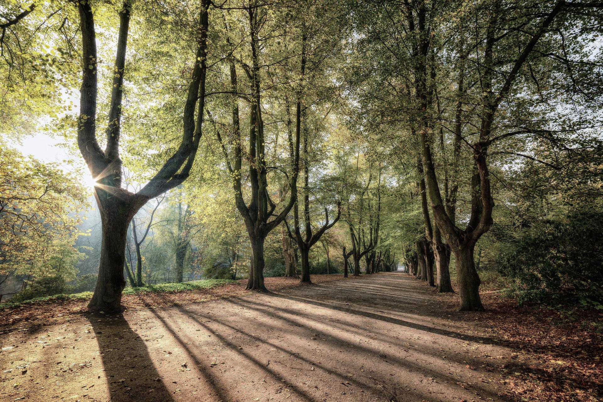 Mindfulness en comunidad: 7 Factores para una vida plena