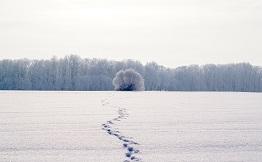 Retiro Fudamentos de Mindfulness: Cinco días de retiro en silencio